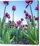 Msu Spring 20 Acrylic Print