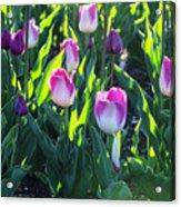 Msu Spring 3 Acrylic Print