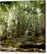 Mt Field Forest Acrylic Print