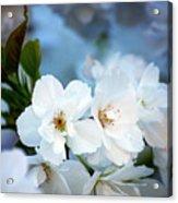 Mt. Fuji Cherry Blossoms Acrylic Print