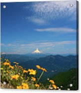 Mt. Hood In The Distance Acrylic Print