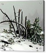Mt Hood Snow Acrylic Print