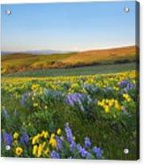 Mt. Hood Wildflower Morning Acrylic Print