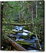Mt Hood Wilds Acrylic Print