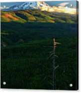 Mt Hood With Snag Acrylic Print