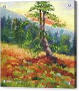Mt. Jumbo Tree Ak Acrylic Print