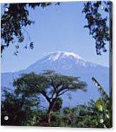 Mt. Kilimanjaro,moshi,tanzania Acrylic Print