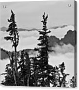 Mt Rainier National Park Acrylic Print