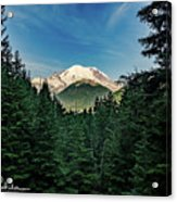Mt Rainier Through The Trees Acrylic Print