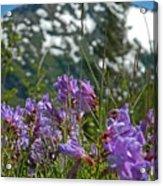 Mt. Rainier Wild Flowers Acrylic Print