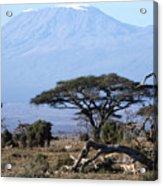 Mt.kilimanjaro Acrylic Print