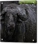 Mud Sculpture-signed Acrylic Print
