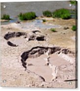 Mud Volcano Area In Yellowstone National Park Acrylic Print