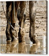 Muddy Reflections.. Acrylic Print