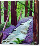 Muir Woods - Psalm 1 Verse 3 Acrylic Print