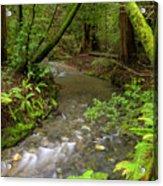Muir Woods Stream Acrylic Print