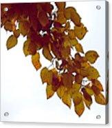 Mulberry Autumn Acrylic Print