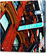 Mulberry Street Sketch Acrylic Print
