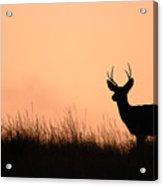 Mule Deer Buck Against South Dakota Sunset Acrylic Print