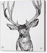 Mule Deer Buck Acrylic Print