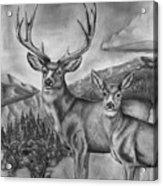 Mule Deer Heaven Acrylic Print