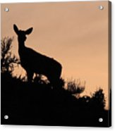 Mule Deer Silhouetted Against Sunset Ridge Acrylic Print