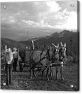 Mule Drawn Wagon Acrylic Print