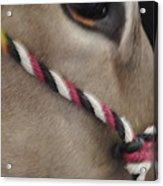 Mule Eye Acrylic Print