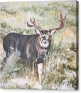 Muley Acrylic Print