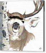 Mulie Buck And Aspen Acrylic Print