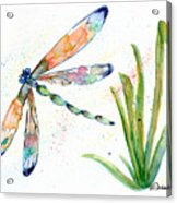 Multi-colored Dragonfly Acrylic Print