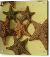 Multi-colored Star Fish On The Sand Acrylic Print