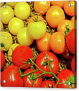 Multi Colored Tomatoes Acrylic Print