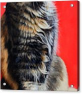 Multicolored Cat In Red Background  Acrylic Print