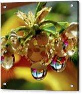Multicolored Drops Acrylic Print
