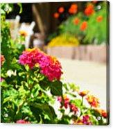 Multicolored Flowers Acrylic Print