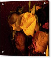 Multicolored Roses Wilting  Acrylic Print