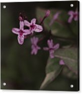 Multiples In Bloom Acrylic Print