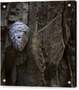 Mummy Head Acrylic Print by Barbara Schultheis