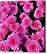 Mums The Word Acrylic Print