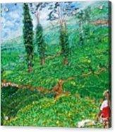 Munnar Tea Gardens Acrylic Print