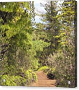 Munro Trail Acrylic Print by Ron Dahlquist - Printscapes