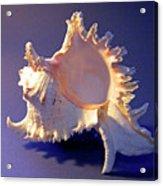 Murex Ramosus Seashell Acrylic Print