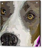 Murphy -- The Closeup Acrylic Print