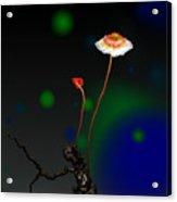 Mushroom 1 Acrylic Print by GuoJun Pan