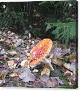 Mushroom A Fly Agaric Acrylic Print