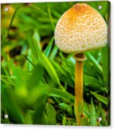 Mushroom And Grass Acrylic Print by Fabio Giannini