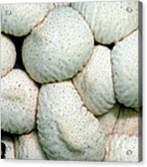 Mushroom Cluster Acrylic Print