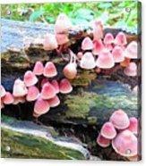 Mushroom Condo Acrylic Print