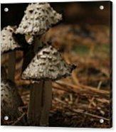 Mushroom Family Acrylic Print